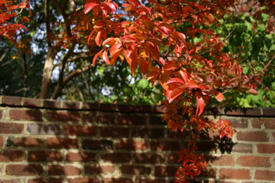 Serpentine Walls in Fall