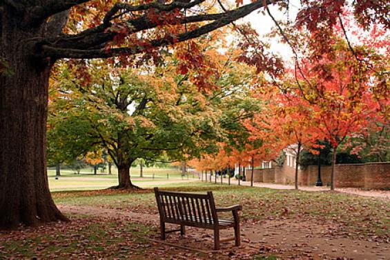 Fall at UVa